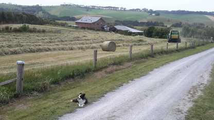 Roseda Farm laneway