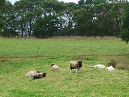 The lawn mowers at rest