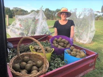 The Pear Harvest